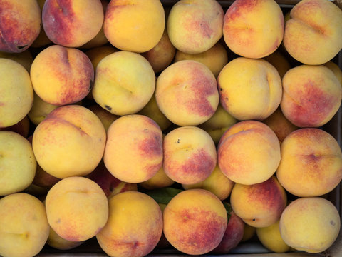 Background of a stacked yellow peaches close up. Yellow peaches pattern on sale at the market.