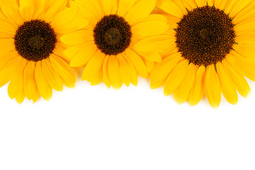 three sunflowers on white