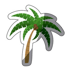 Palm tree icon. Nature plant summer and season theme. Isolated design. Vector illustration