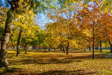 Autumn colorful vegetation of Queens Park - Toronto, Ontario, Canada