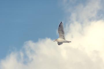 Möwe vor Wolken fliegend
