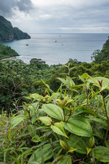 View over Wafers Bay Cocos Island
