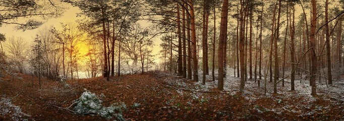 the first snow in the pine forest near the stream