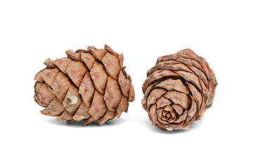 Two cedar cones on white background