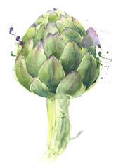 Artichoke vegetable watercolor painting illustration isolated on white background
