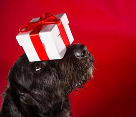 Black dog in santa outfit.