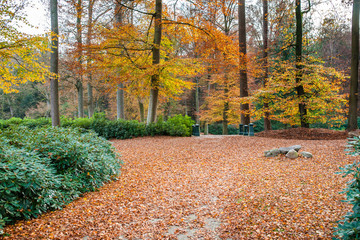 path is in the autumn forest with amazing colors and leaves