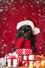Black dog in santa outfit.