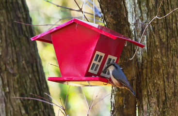 bird house - feeder