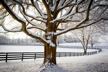 Winter in Kentucky.