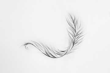 Sketch of light feather white background.