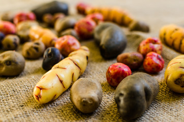 Close up of colorful Bolivian and Peruvian baby potatoes and tubers against rustic brown and beige background. Texture and pattern. Selective focus.