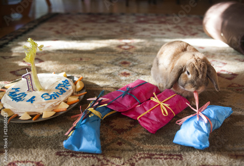 A pet bunny is offered presents and a birthday cake on his first