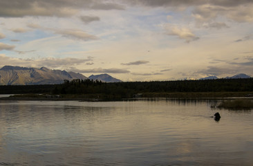 Sunset and Grizzly Bear at Naknek Lake, Alaska.