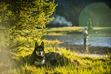 A husky sits on the side of an alpine lake at sunset.