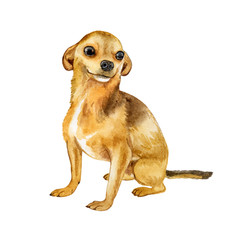 Watercolor closeup portrait of chihuahua dog isolated on white background. funny dog sitting. Hand drawn sweet home pet. Popular toy smallest dog. Greeting card design clip art illustration