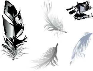 five grey feathers on white background