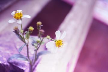 Wild  flower  background  vintage filter effect