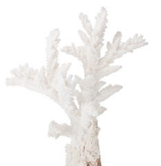 white small isolated coral branch