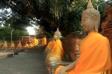 Buddha image under the tree
