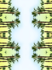 Palm tree reflection,tropical artwork.