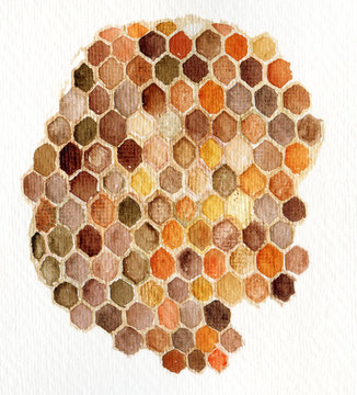 Watercolor hand painted honeycomb on white background. Original design