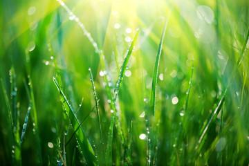 Fotoväggar - Grass. Fresh green spring grass with dew drops closeup