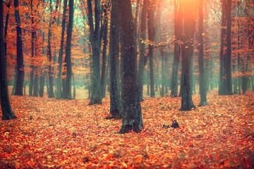 Fototapete - Autumn landscape, trees and leaves. Fall scene