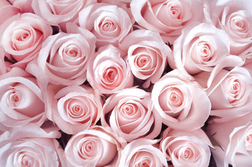 Foto auf Leinwand Roses Pink roses as a background