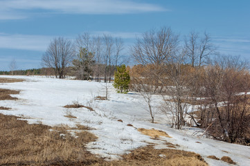 early spring grain stubble of mown old packed snow, streams of w