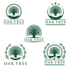 eco green oak tree vector logo design