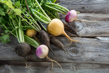 colorful organic healthy black radishes and turnips for genuine gardening
