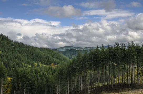 PNW Landscape