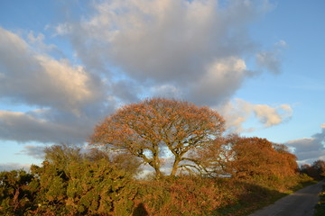 autumn trees clouds sky