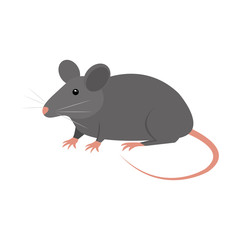 rat animal isolated icon vector illustration design