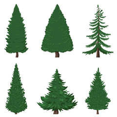 Vector Set of Cartoon Pine Trees on White Background