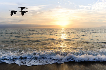 Wall Mural - Ocean Sunset Birds