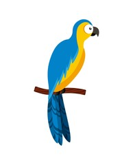 macaw bird icon over white background. brazilian culture concept. colorful design. vector illustration