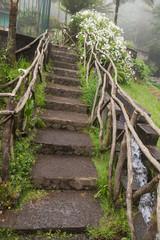 Mystical forest, Ribeiro Frio, Madeira, Portugal, Europe