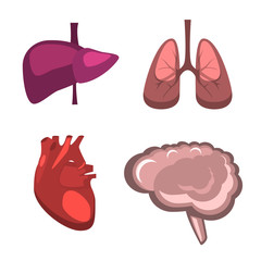 Human internal organs vector liver, brain, lungs, heart medicine anatomy.