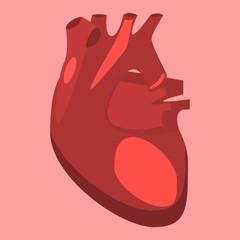 Human internal organs vector heart medicine anatomy.