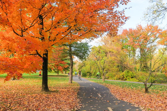 Fall colors on the Mount Vernon Trail in Alexandria, VA