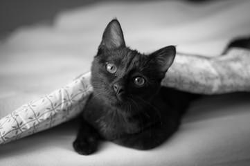 Mały kotek pod kołdrą