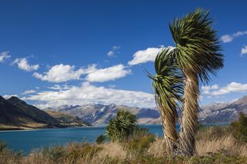 New Zealand, South Island, Otago, Wanaka-area, Lake Hawea