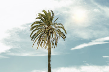 Nostalgic and abstract beach scene. Summer. At foreground, one palm tree. At the background, the sky with sun reflexion. Cloudy day. Mediterranean landscape elements.