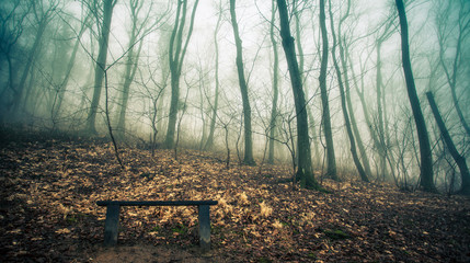 Forest  Bench in  the mist