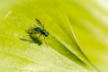 Macro of a bug on a leaf - Shallow depth of field