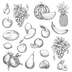 Fruits vector sketch isolated icons
