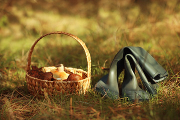 Rubber boots and wicker basket with mushrooms in forest, closeup