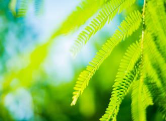 Green leaf background blur focus